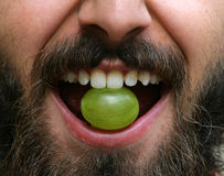 Bearded man with grape in his mouth Stock Photography