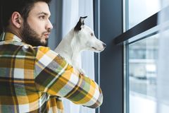 Bearded man holding jack russell terrier dog and looking. At window stock image