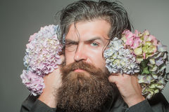 Bearded man with hydrangea flowers Royalty Free Stock Image
