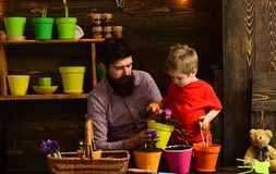 Bearded man and little boy child love nature. Flower care watering. Soil fertilizers. happy gardeners with spring royalty free stock photos
