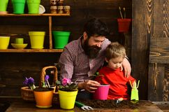 Bearded man and little boy child love nature. happy gardeners with spring flowers. Family day. Greenhouse. Father and royalty free stock photos