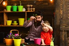 Bearded man and little boy child love nature. happy gardeners with spring flowers. Family day. Greenhouse. Father and. Bearded men and little boy child love stock photo