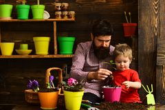 Bearded man and little boy child love nature. happy gardeners with spring flowers. Father and son. Family day stock photography