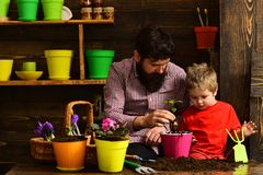 Bearded man and little boy child love nature. happy gardeners with spring flowers. Flower care watering. Soil stock photography