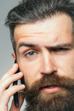 Bearded man with mobile phone Stock Photography