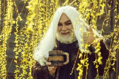Bearded man with mug in bloom. Druid old man with long grey hair and beard on smiling face with wooden mug in hands in yellow flower bloom sunny day outdoor on royalty free stock images