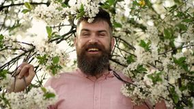 Bearded man near blooming cherry tree. Hipster sniffs cherry blossom. Man with beard and mustache on smiling face near. Tender white flowers. Summer mood stock video