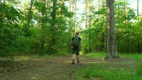 A bearded man in shorts with sneakers and with a backpack walks through the forest. Travels. Adventure stock footage