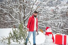 Bearded man with snowman is carrying Christmas tree in the wood. A handsome young man with snow man carries a Christmas stock photos