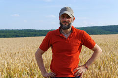 Bearded man standing in a wheat field on sunny day Royalty Free Stock Image