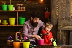 Bearded man and little boy child love nature. Flower care watering. Soil fertilizers. Family day. Greenhouse. happy stock photo