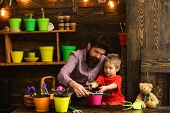 Bearded man and little boy child love nature. happy gardeners with spring flower. Father and son. Fathers day. Flower. Bearded men and little boy child love royalty free stock images