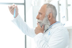 Bearded scientist in white coat thinking and looking at tube with reagent in chemical lab. Senior bearded scientist in white coat thinking and looking at tube Stock Image
