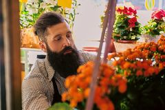 The bearded stylish flower seller holds pink roses in a market s. Hop stock photography
