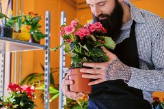 The bearded stylish flower seller holds pink roses in a market s. Hop stock image