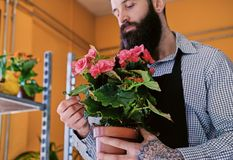 The bearded stylish flower seller holds pink roses in a market s. Hop stock images