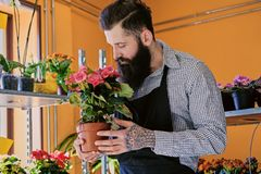 The bearded stylish flower seller holds pink roses in a market s. Hop stock photo
