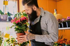 The bearded stylish flower seller holds pink roses in a market s. Hop royalty free stock photos