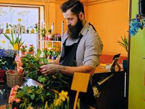 The bearded stylish flower seller holds pink roses in a market s. Hop royalty free stock photography