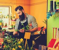 The bearded stylish flower seller holds pink roses in a market s. Hop royalty free stock images