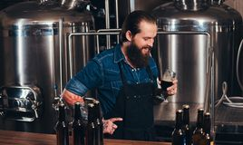 Bearded tattooed hipster male in a jeans shirt and apron working in a brewery factory, standing behind a counter, holds. Cheerful bearded tattooed hipster male Stock Images