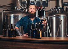 Bearded tattooed hipster male in a jeans shirt and apron working in a brewery factory, standing behind a counter, holds. A glass of beer for quality control Stock Image