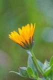 Beardy Flower. Shot in Mercadante's forest, Apulia, Italy stock photography