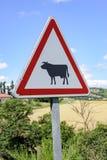 Beare de vacas Fotos de archivo