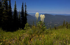 Beargrass über dem Tal Lizenzfreie Stockfotografie