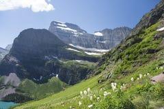 Beargrass - ίχνος παγετώνων Grinnell - εθνικό πάρκο παγετώνων Στοκ Εικόνες
