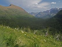 Beargrass en Vallei Stock Fotografie