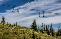 Beargrass on a Ski Run Ridge Stock Image