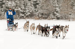 Beargrease 2015 Marathon Blake Freking at Trail Center Checkpoin Royalty Free Stock Photography