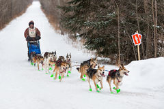 Beargrease 2015 Marathon Denis Tremblay on Trail. TWO HARBORS MN - JANUARY 25: Denis Tremblay's team makes a turn on the trail during the Marathon portion of the Royalty Free Stock Photos