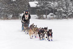 Beargrease 2015 Marathon Erin Altemus Leaving Trail Center Royalty Free Stock Image