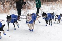 Beargrease Team Crosses 2015 en el punto de control de Sawbill Fotografía de archivo libre de regalías