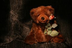 Bearing a Rose. Bear with Rose Painted in Light Royalty Free Stock Photos