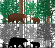 Bears. On the background of trees. Colour and black-and-white vector Stock Photos