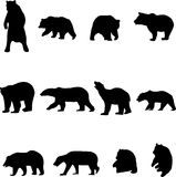 Bears and Chinese pandas. Bear is the largest land carnivores Royalty Free Stock Photos