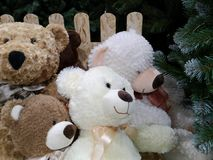 Bears for christmas stock images
