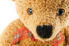 Bears doll on white background Stock Image