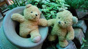 Bears in the garden Stock Photography