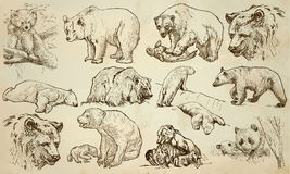 BEARS - An hand drawn vector pack, line art Stock Photos