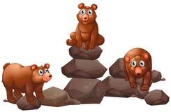 Bears Stock Image