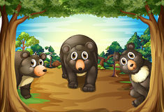 Bears and jungle. Three bears living in the jungle Royalty Free Stock Photos