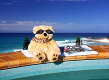 Bears Just Wanna Have Fun. Bear sitting by the pool with beach in backdrop Royalty Free Stock Photo