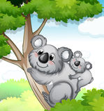 Bears in nature Royalty Free Stock Photography