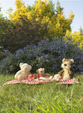 Bears picnic. Teddy bears and toys sat down to eat a picnic stock images