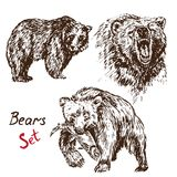 Bears set: sanding, growling, hunting salmon, with inscription. Hand drawn doodle, sketch in pop art style, vector illustration Stock Photos