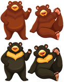 Bears. Set of two brown bears and two black bears royalty free illustration